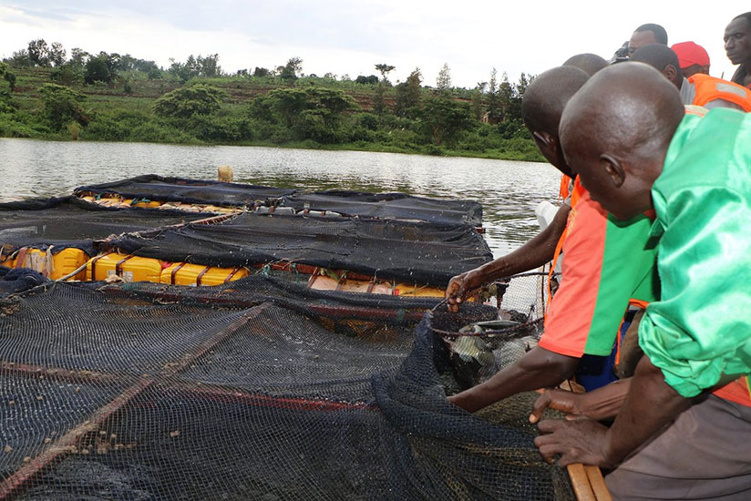 1517252871Jarama-fish-cooperative-in-Ngoma-district-plays-role-in-protecting-the-lake-and--thus-fish-production-has-increased