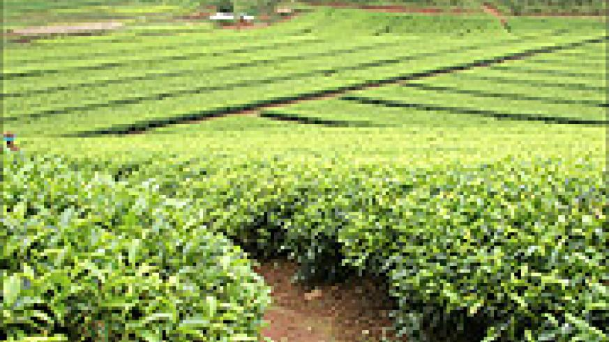 African countries produce similar agricultural products, thus rendering their marketability difficult.
