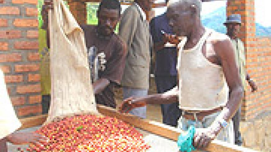 Coffee Cooperatives in Rwanda are blossoming. (File photo).