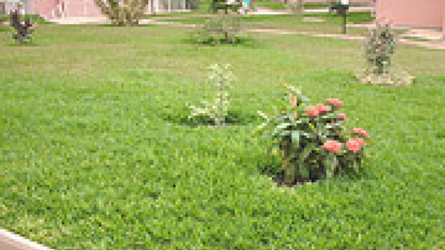 Flowers boost the beauty of the compound.