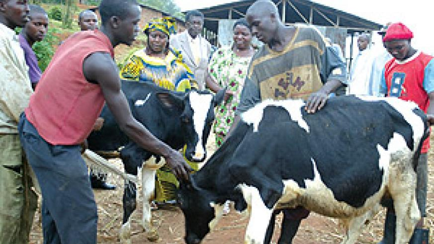 The Deputy Speaker of the Lower Chamber of Parliament, Amb. Polisi Denis, yesterday donated cows to women farmers of Rutsiro district.