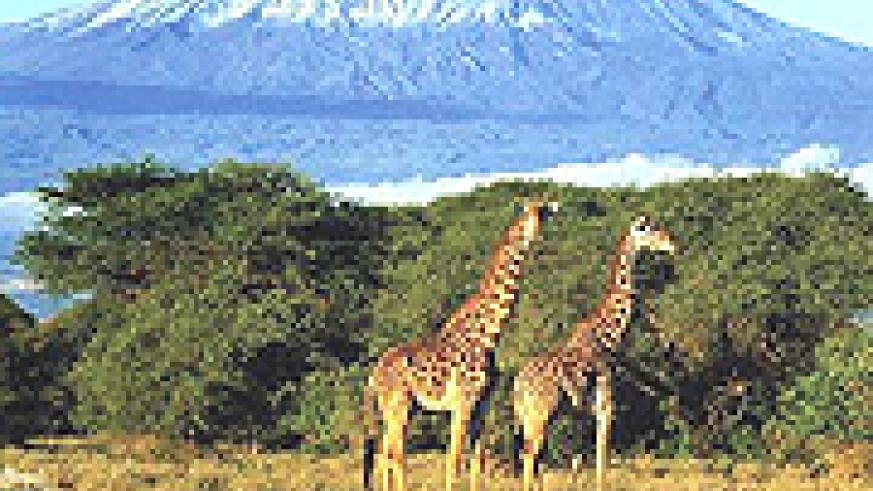 Kilimanjaro national park, Mountains of the Mooon ice is melting at fast rate due to climatic changes.