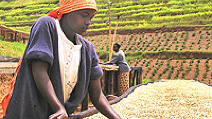 A Rwandan woman at one of the 120 coffee washing stations in the country.