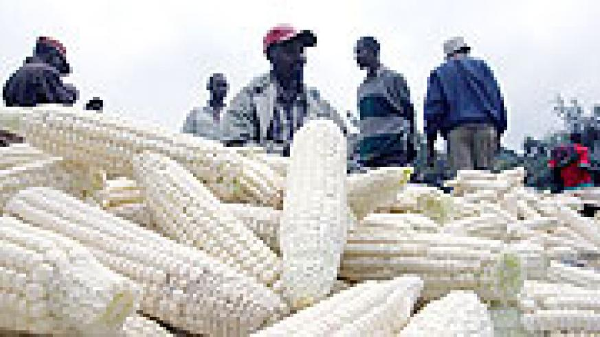 Kenyan market vendors selling maize in Kagemi