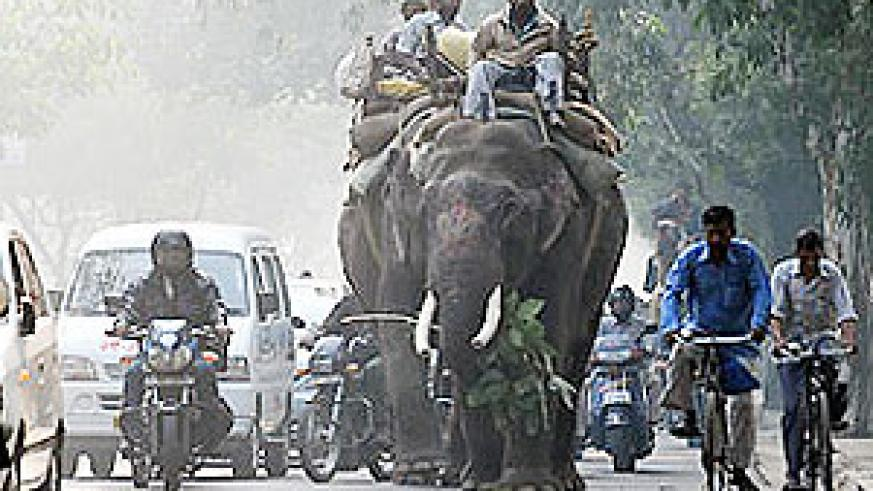 Elephants walk past traffic in New Delhi