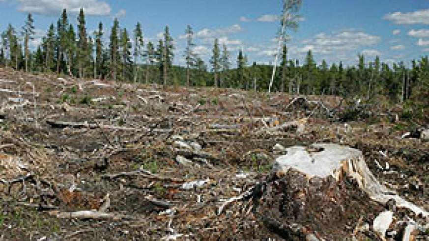 Deforestation has ravaged large tracts of global tree cover