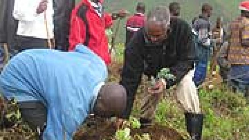 Education Minister Dr Charles Murigande helps a resident to plant a seedling in Gishwati forest on Tuesday (Photo: S. Nkurunziza)