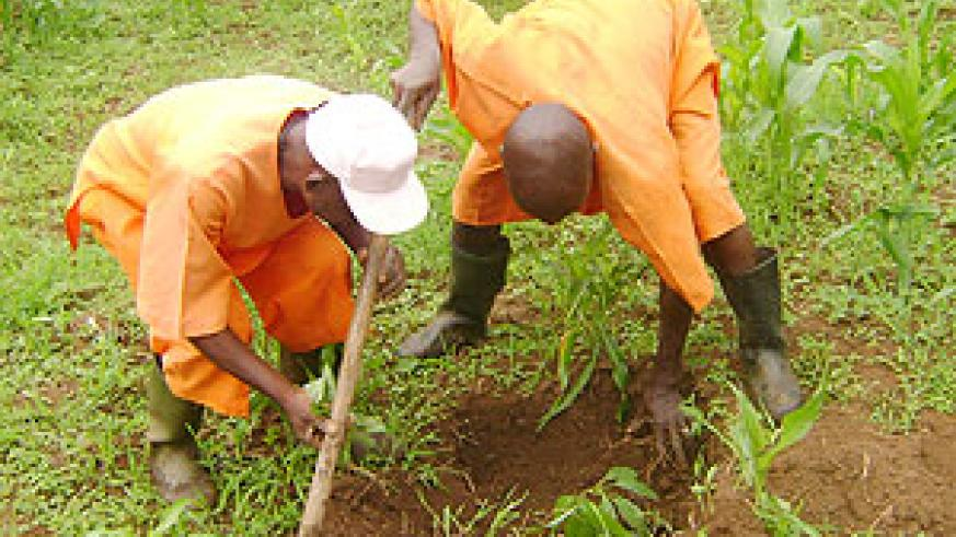 Prisoners have gained various agricultural skills.