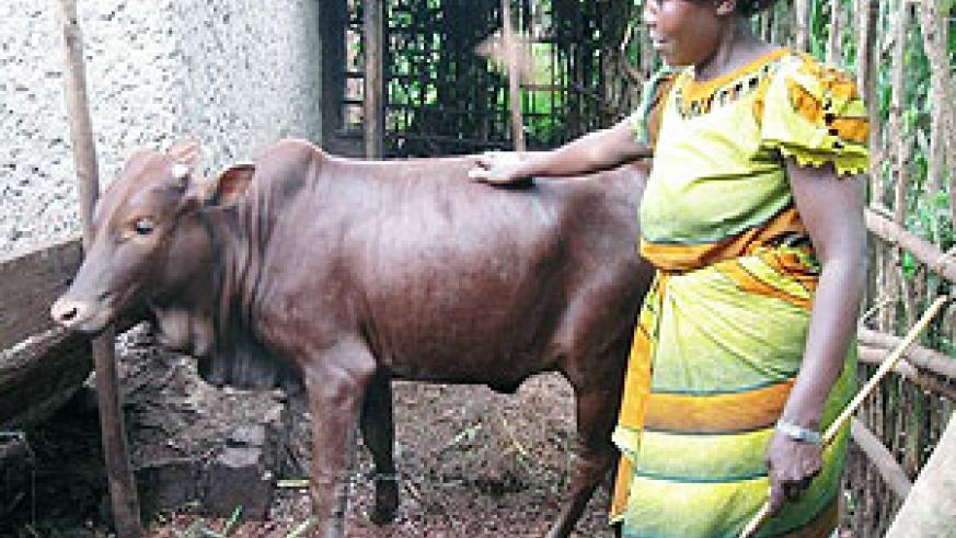 A beneficiary of the new savings product showing off her Heifer she bought using funds from the new scheme.