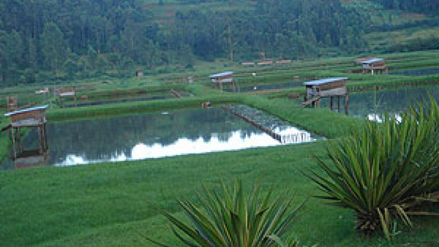 Some of the fish ponds to be stocked  with imported fingerlings. (file photo)