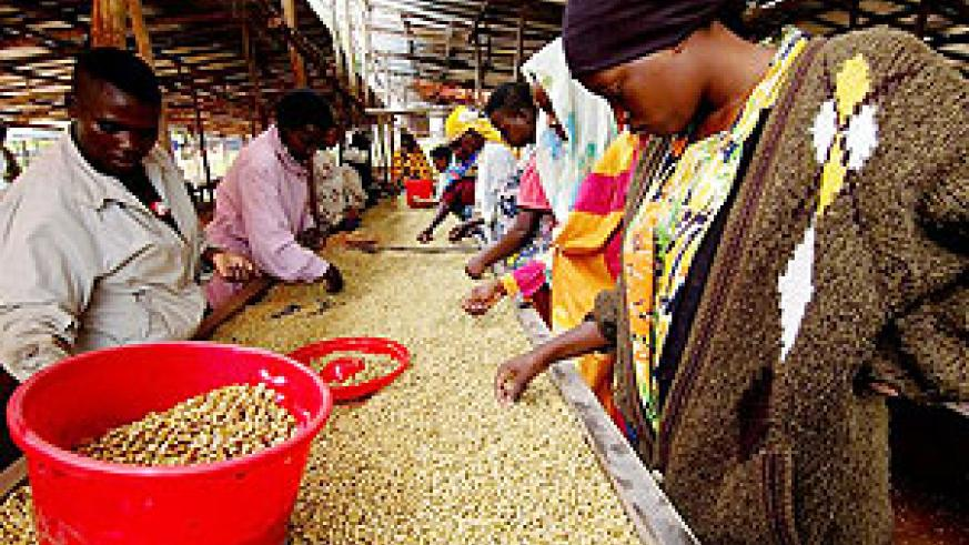 Sorting coffee. Growth is being led by a revitalised agricultural sector.