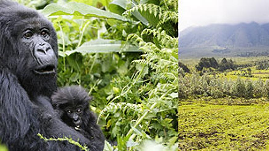 L-R : Conserving the environment leads to natural diversity ; The environment sustains man in various aspects.