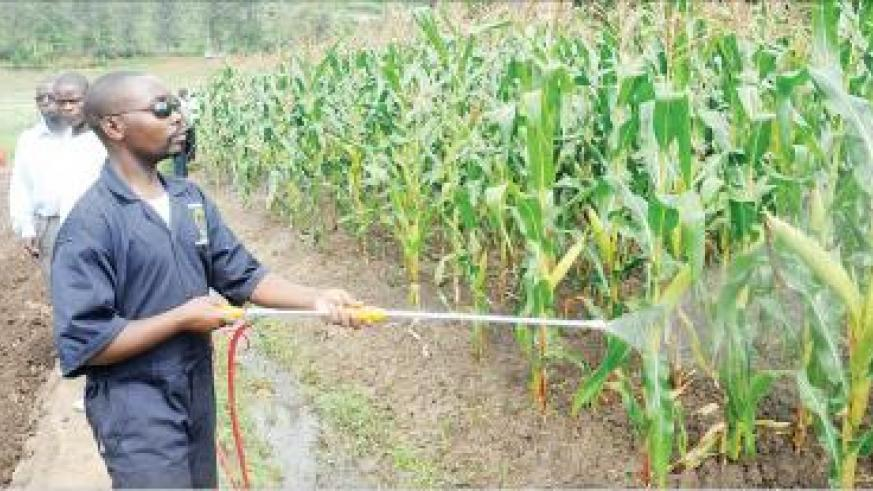 Agriculture would boost economic growth. The  New Times / J. Mbanda.