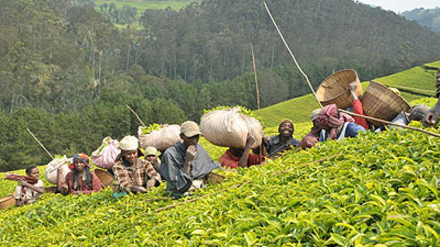 Tea exports seen rising.  The New Times. File.