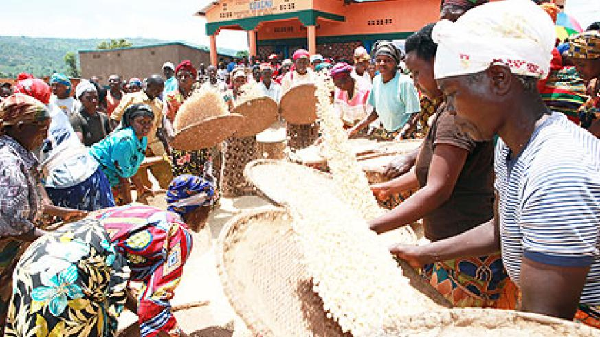 Maize post harvest handling in Rwanda. AfDB seeks to promote post inclusive growth.  The New Times / File