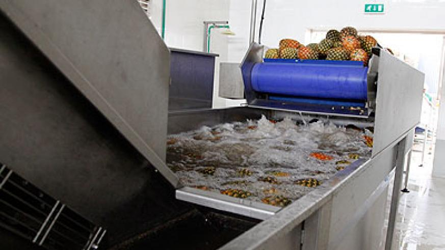 Pineapples being washed at Inyange. The residue water can be recycled and reused.  The New Times / T. Kisambira.
