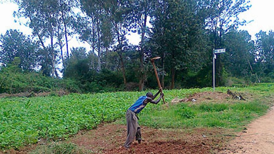 A peasant farmer tills land. The government is increasing agriculture funding to boost food crop production. The New Times / Peterson Tumwebaze