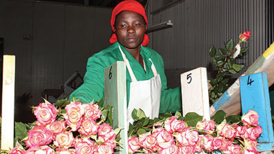 A worker arranges flowers at a show. The government is looking to non-traditional exports like flowers to boost export earning and reduce trade deficit. The New Times / File phote