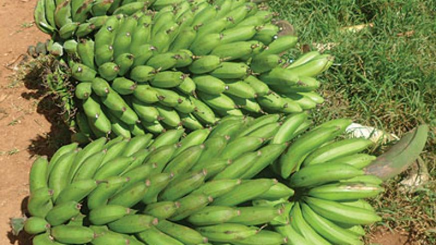 The price of bananas was unchanged at Rwf180 per kilo in most markets across the city. The New Times / File photo