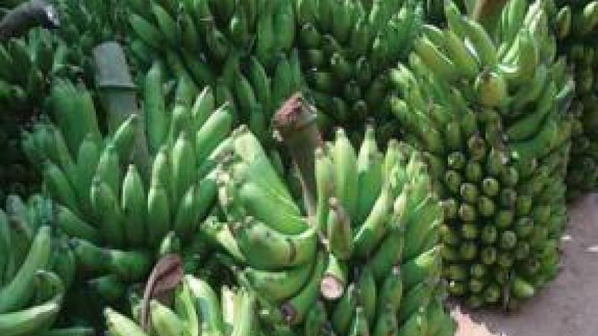 The price of bananas is unchanged at Rwf180 and Rwf190 per kilogramme in most markets across the city. The New Times / File photo