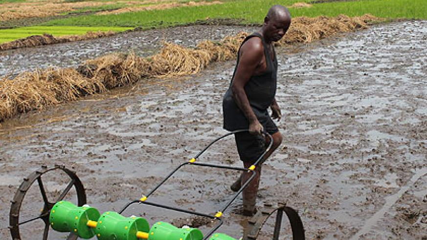 A farmer in Bugarama uses the DPS. With the implement, rice nurseries and transplanting of seedlings will no longer be necessary.  The New Times/ Jean Pierre Bucyensenge.