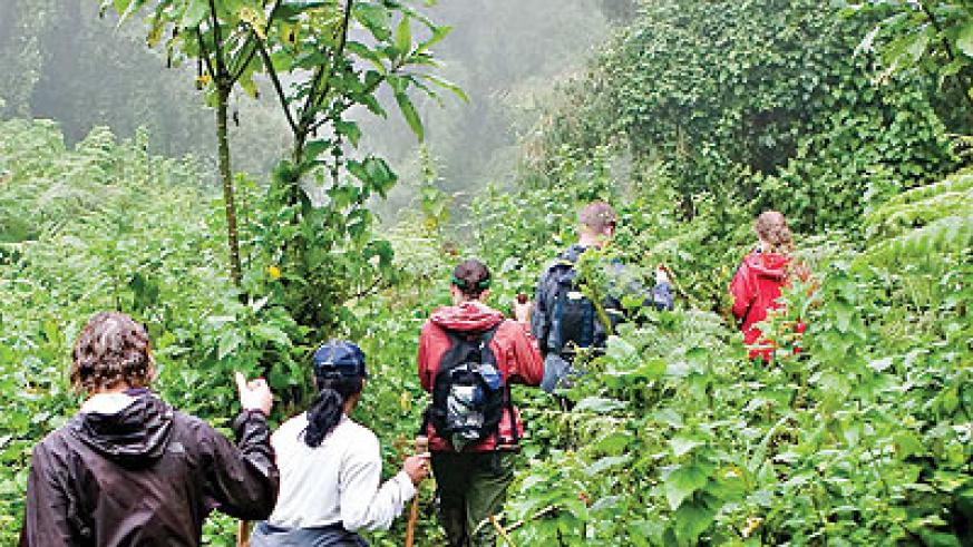 Tourists tracking gorillas. Hoffman to give global audiences a broader view of Rwanda. The New Times /File