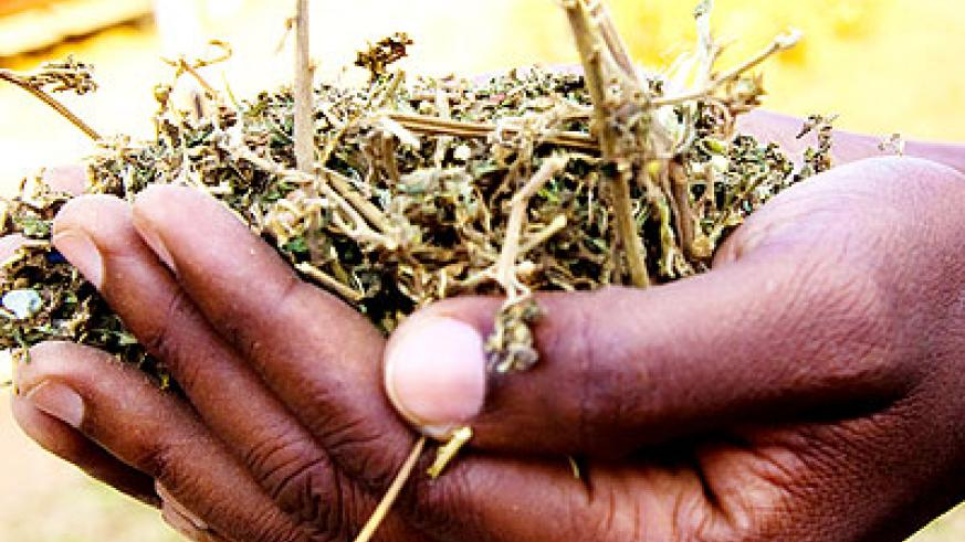 Youths in Musanze told to stay off drugs. The New Times/ File.