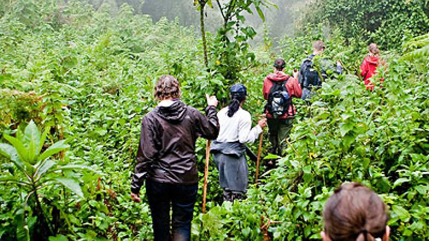 Tourists tracking gorillas. The tourism industry is being threatened by poor skills. The New Times / File.