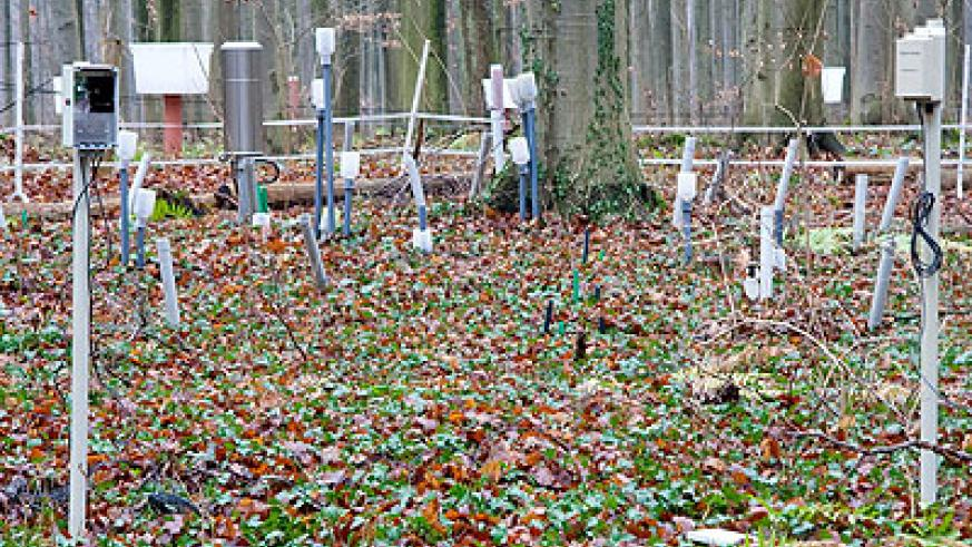 A wireless sensor network monitors microclimate in a forest. It records data such as soil and leaf moisture and air temperature. Net photo.