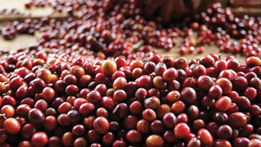 BOOST: NAEB will next month train coffee sector stakeholders in a move aimed at improving quality along the supply chain, and also to help them understand market trends. The New Times / File