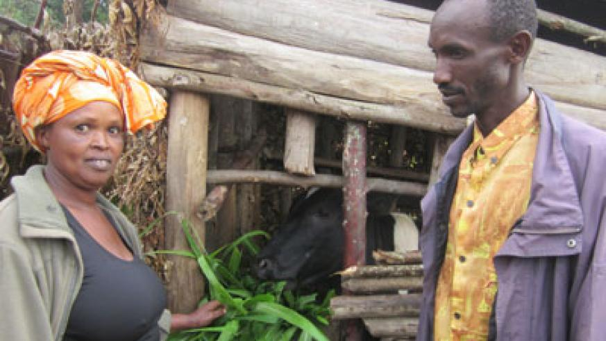 Mukagatare feeds their cow as her husband, Ruzindana, looks on. The two Genocide survivors have picked themselves up and moved on. (Eugene Kwibuka)
