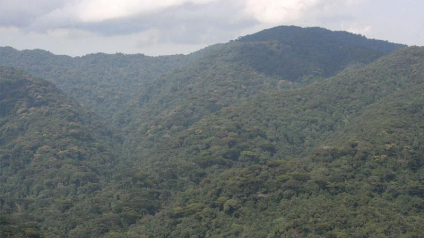 Rwanda is globally recognized for her sustained efforts to protect the environment (File)