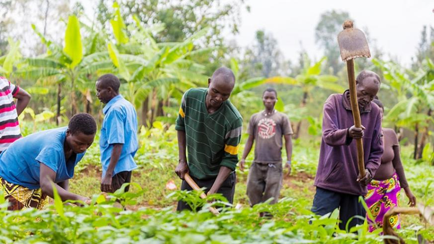Farmers in Kicukiro District till their land last month. / Timothy Kisambira.