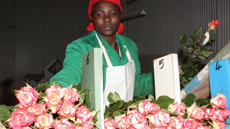 Kenya exports over 30% of its flowers and horticulture produce to Europe. / File.