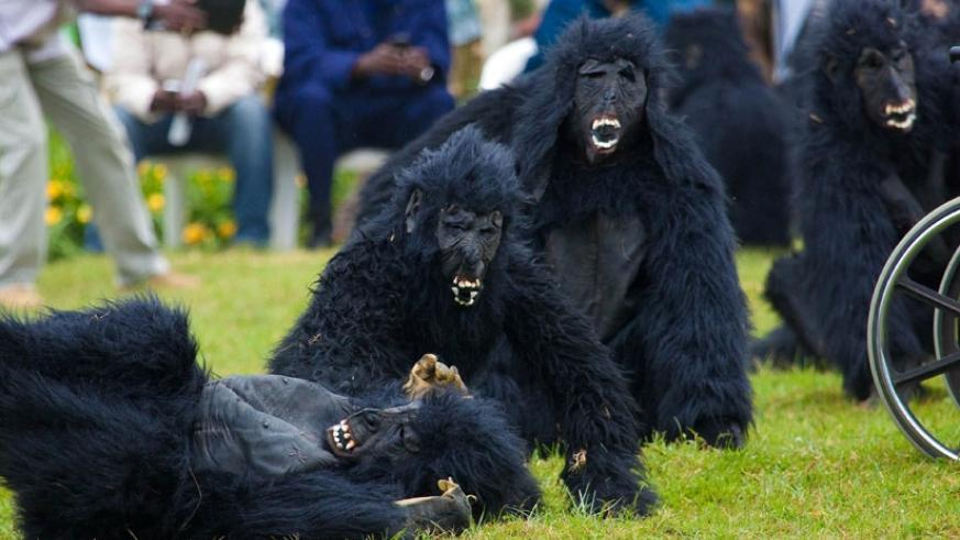 Humans mimic mountain gorillas during a past Kwit'izina ceremony in Kinigi, at the foot of Virunga National Park, home to the rare primates in Rwanda . (File)