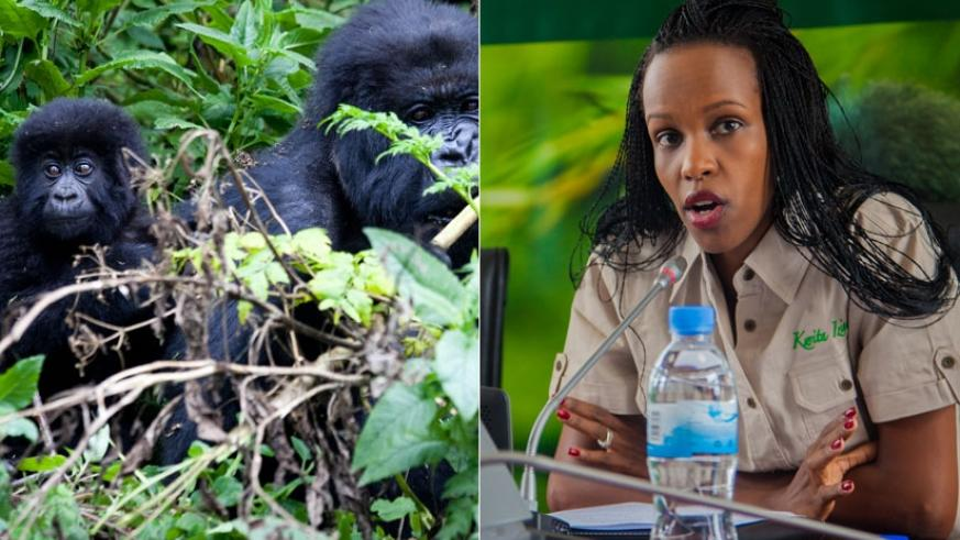 RDB's Chief Tourism Officer Belise Kaliza (R) said that RDB supports projects that benefit development and welfare of communities living around national parks. / Faustin Niyigena  ....