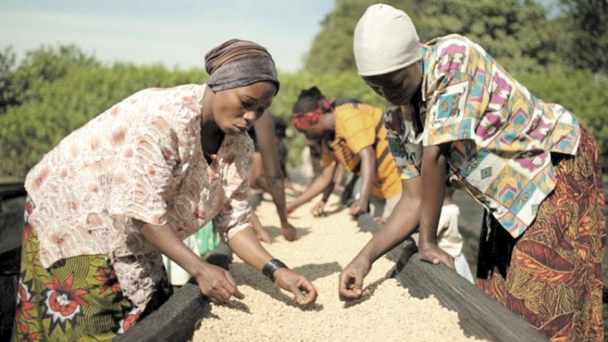 Workers at the co-operative's washing station sort coffee beans. Nyiramahoro markets her coffee through the group. (Timothy Kisambira.)