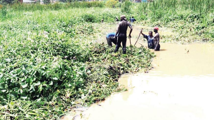 Wetlands in Rwanda are under pressure from poor agricultural practices, peat extraction, illegal mining, pollution, dumping of waste, construction activities and illegal infrastruc....