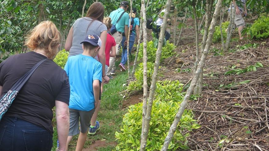 Agro-tourists in a coffee plantation in Huye. Researchers are calling for more support for firms that invest in conservation initiatives.