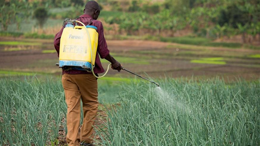 A farmer sprays his onion garden. Farmers say a specialised banker for agriculture could help unleash the sector. File