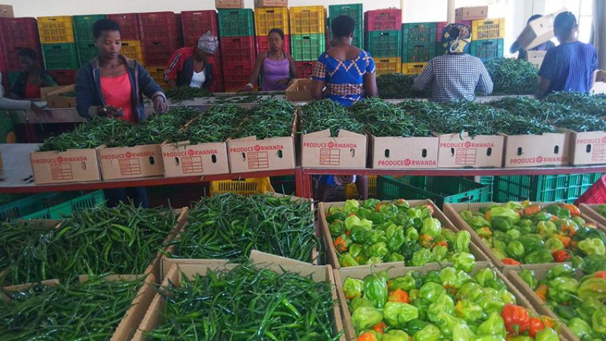 Women sort red and green pepper at NAEB's Pack House. Companies need to know taxes they are expected to pay, when and how to pay them. / File