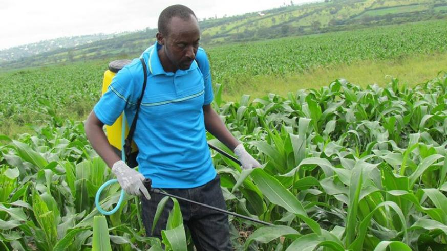 Didas Kayitare, the vice mayor in charge of economic development, Nyagatare District, sprays a maize plantation with army worm pesticides. The East African Community intends to har....