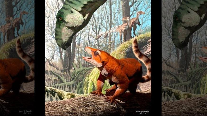 """The 130 million-year-old fossilized skull belonged to a """"reptile-like mammal.""""(Illustration: Jorge A. Gonzalez)"""