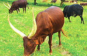 Cows to be inspected by World Animal Health Organisation (OIE).