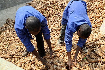 Kinazi cassava plant workers sorting cassava. The New Times / File.
