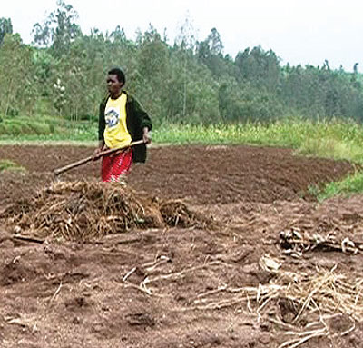 One of the maize farmers (right) prepaper her garden in Takwe wetland. Farners in Muhanga District are reaping big from organised produce selling. The New Times / Seraphine Habimana.
