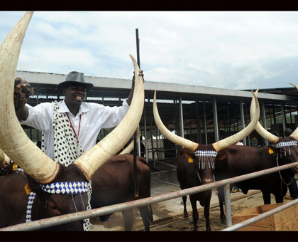 Inyambo traditional cows are expected to be part of the Cultural exhibition at the Nyanza-based history museum. John Mbanda.