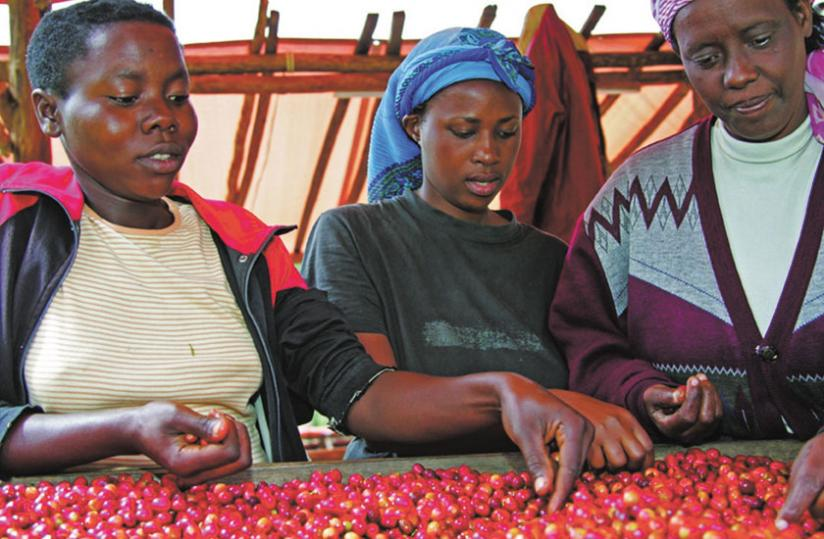 Women sort coffee beans in Maraba last year. (File)
