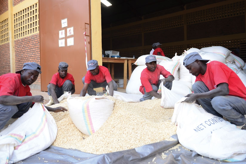 Workers package maize at an EAX warehouse. Grain farmers working with EAX will get soft loans soon.