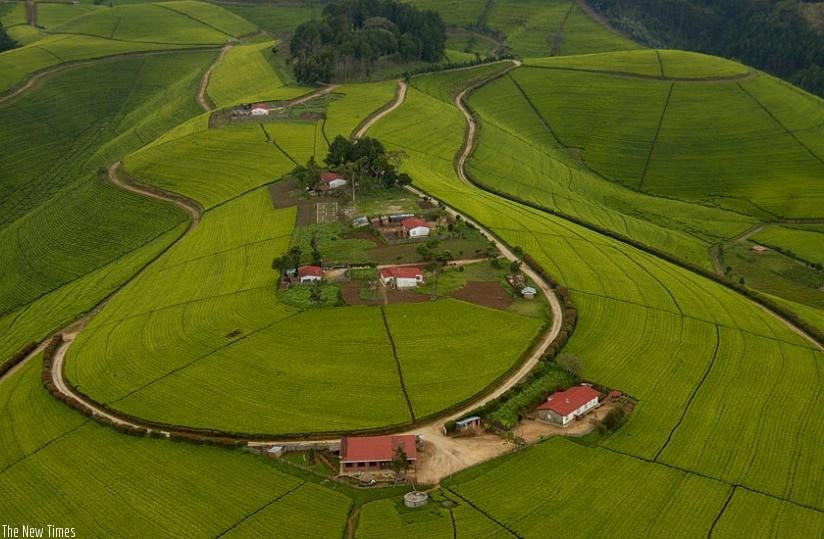 An aerial view of a tea plantation in Rwanda. (File)